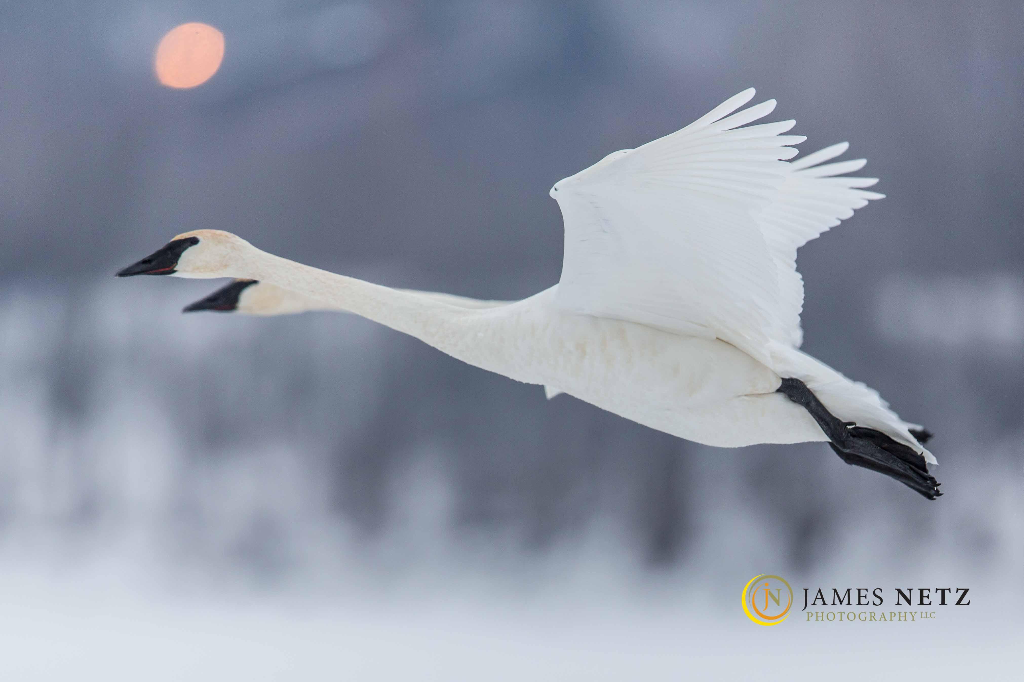 © James Netz-12369